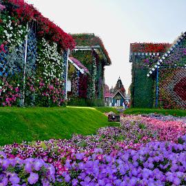 Miracle Garden by Nadeem M Siddiqui - Flowers Flower Gardens