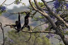 Escape to Chimp Eden (S2E9)