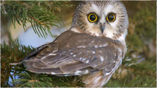 Owl wallpaper apps on google play screenshot image voltagebd Images