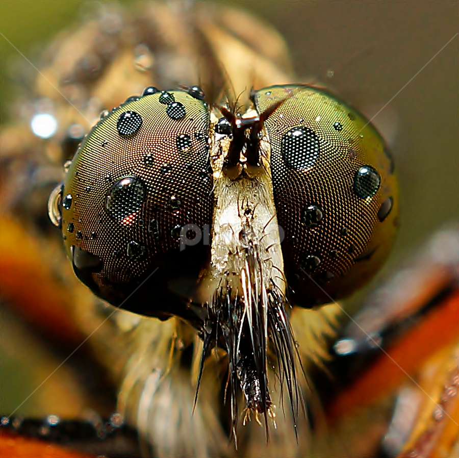 by Abgtamz Ally - Animals Insects & Spiders ( macro, art, nature up close, insects, animal )