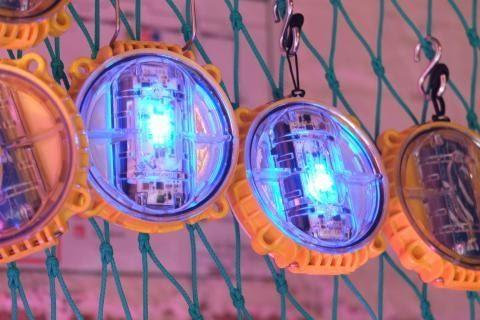 sces - The light LED devices set out to reduce bycatch by up to ...
