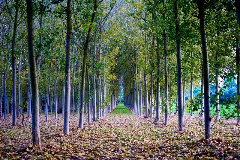 Colori d'autunno di rm-SimoneCavallero Photography