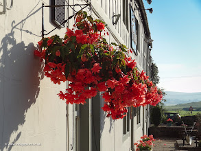 Photo: Flowers at outside the Plough