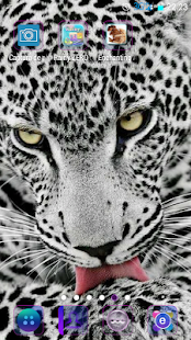 Enchanting Animals - náhled