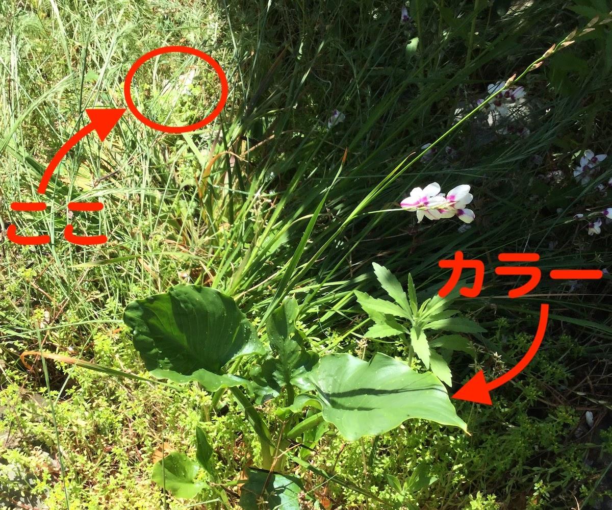 庭に落ちていた1万円札