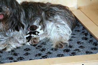 Photo: So kann man prima schlafen - Toffie hat sich Ellie als Kopfkissen ausgesucht