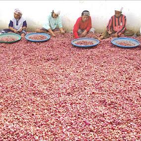 women workers were sorting onions by Krus Haryanto - People Street & Candids