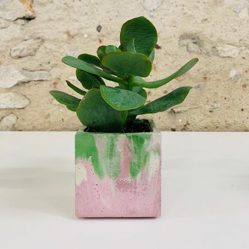 pot en béton marbré vert et rose avec succulente