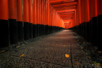Photo: *Accenting Colors || アクセントカラー *  I'm not entirely sure why there were yellow leaves along this path in the middle of May, but nevertheless they were there. Everything outside of this path was as green as it gets! This is another shot from my recent post from Fushimi Inari in Kyoto. See the link below for more.  五月なのに、伏見稲荷大社で紅葉のような葉っぱを見つけたんです。この道いがいにはすべては緑でした。変だと思ったけど、よい機会でしょうね!最近のブログで余分の写真が見える。  http://lestaylorphoto.com/fushimi-inari-shrine-in-kyoto/  #japan #travel #fushimiinari #kyoto #nikon #cooljapan