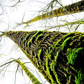by Brett Kurtz - Landscapes Forests ( photos, nature, seattle, green, nola, trees, by, washtington )