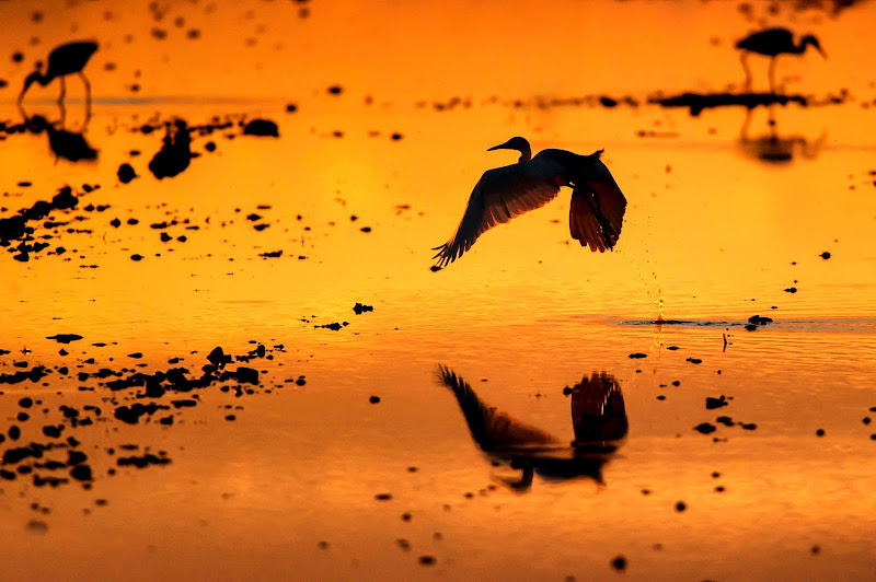 take off in the sunset di Rickytre