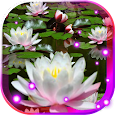 Lotos Lily Water LWP apk