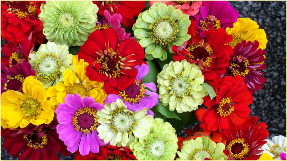 25 free hd flowers - photo #46
