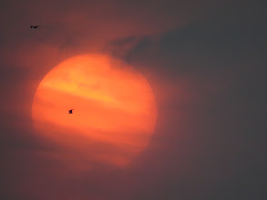 Photo: 18 Jul 13 Priorslee Lake: Strange cloud-effect makes it look as if the rising sun is tilted on its axis: since it is circular this cannot be so! Passing gull accidentally silhouetted! (Ed Wilson)