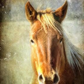 In the spotlight by Vivian Gordon - Animals Horses ( vigor, farm, equine, horse, closeup, country, animal )