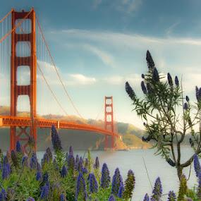 Golden Morning by Mick Brinkmann - Buildings & Architecture Bridges & Suspended Structures