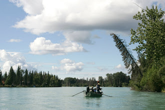 Photo: Working a tree line on the middle Kenai for rainbow trout.
