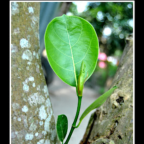 by Rahayu Fipro - Nature Up Close Other Natural Objects