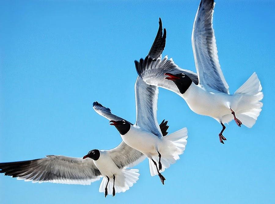 Seaguls~  by Karen Tawater - Animals Birds