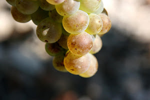 vin-chignin