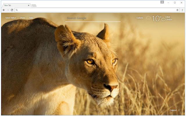 Lion Wallpaper Hd Lions New Tab Themes