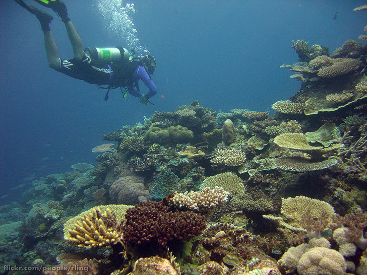 The Yongala Australia (25 Best Dive Sites in the World to Put on Your Bucket List).