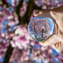 PINK BEAUTY by Paula NoGuerra - Artistic Objects Glass ( spring flowers, spring, blooming, springtime, lensball,  )