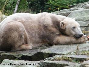 Photo: Egal, Knut relaxt nun ;-)