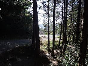 林道に出合う