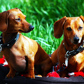 What You Talking About? by Don Mann - Animals - Dogs Portraits ( dogs, photograph, photographs, don, colorful, pup, pictures, vibrant, north, pretty, digital, photography, playing, puppies, southern, nature, digital art, dark, photographer, east, light, bc, british columbia, doggie, canada, beautiful, play, image, photo, portrait, northern, picture, canine, photos, color, peachland, fido, canadian, south, images, puppy, mann, dog, natural, west )