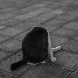 where's its head by Abdul Priswanto - Animals - Cats Kittens ( cats, street, cat, street cat, street photography )