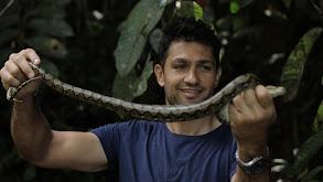 Borneo thumbnail