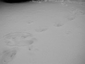 Photo: My footprints and the marks left by my tripod legs from filming here the day before.