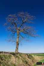 Photo: Lonely Tree#landscape #landscapephotography #tree #treephotography #blue #green #europeanphotography #naturephotography