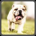 Угадай породы собак! icon