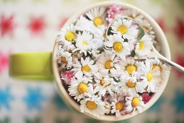 Flavor of Springtime di Tindara