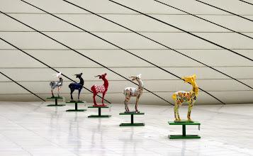 Photo: Myös Oryx-antilooppeja eri väreissä oli tarjolla