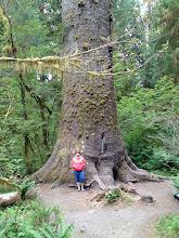 """Photo: Large Sitka Spruce tree (ель). Еще там есть Douglas Fir (псевдо-цуга) и Western Hemlock (западная цуга). А не просто """"елки"""". Кстати, """"fir"""" -- это пихта."""