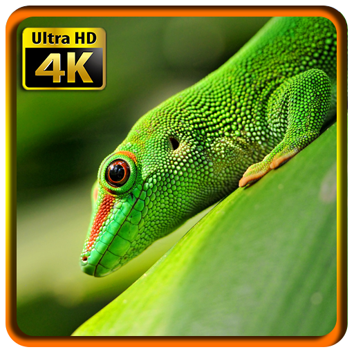 Download Wallpapers Macro 4K UHD For PC