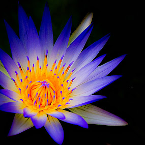 by Jali Razali - Nature Up Close Flowers - 2011-2013 ( flower, nature, flowers,  )