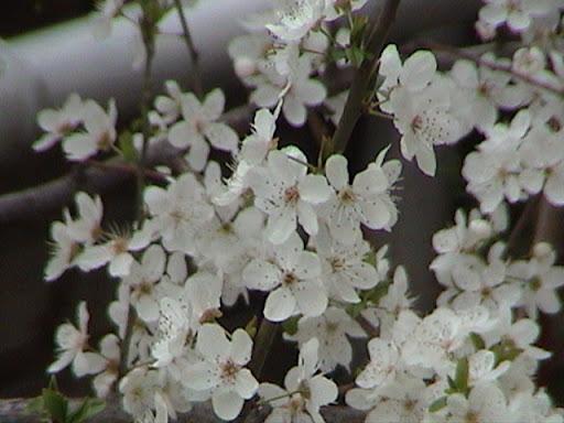 با سلام در برف شدید دیدن گل بهاری دیدن دارد