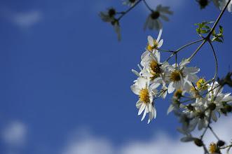 Photo: #flowersphotography  #flowers  SOOC
