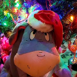 by Jolene Schack Dommer - Public Holidays Christmas (  )