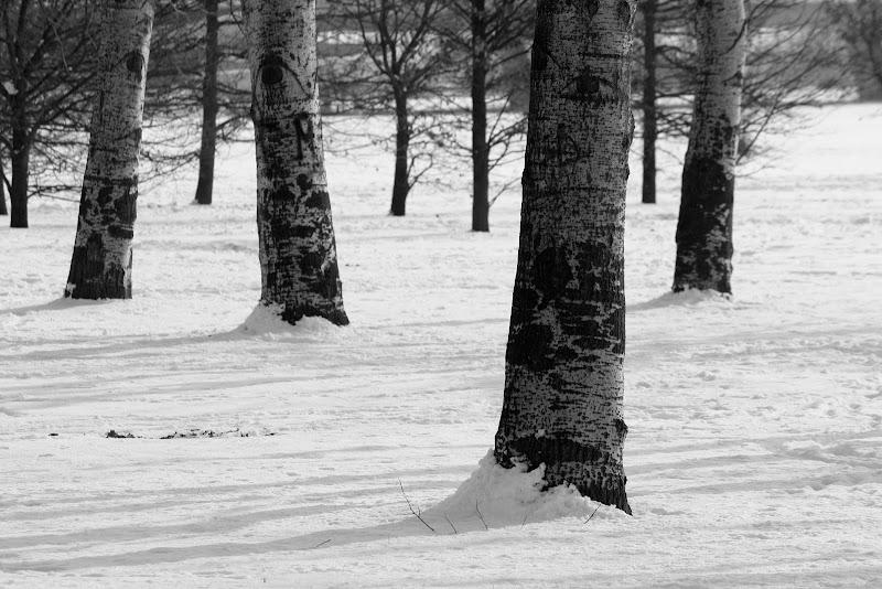 Nel bosco... a gennaio di BlackPuffin