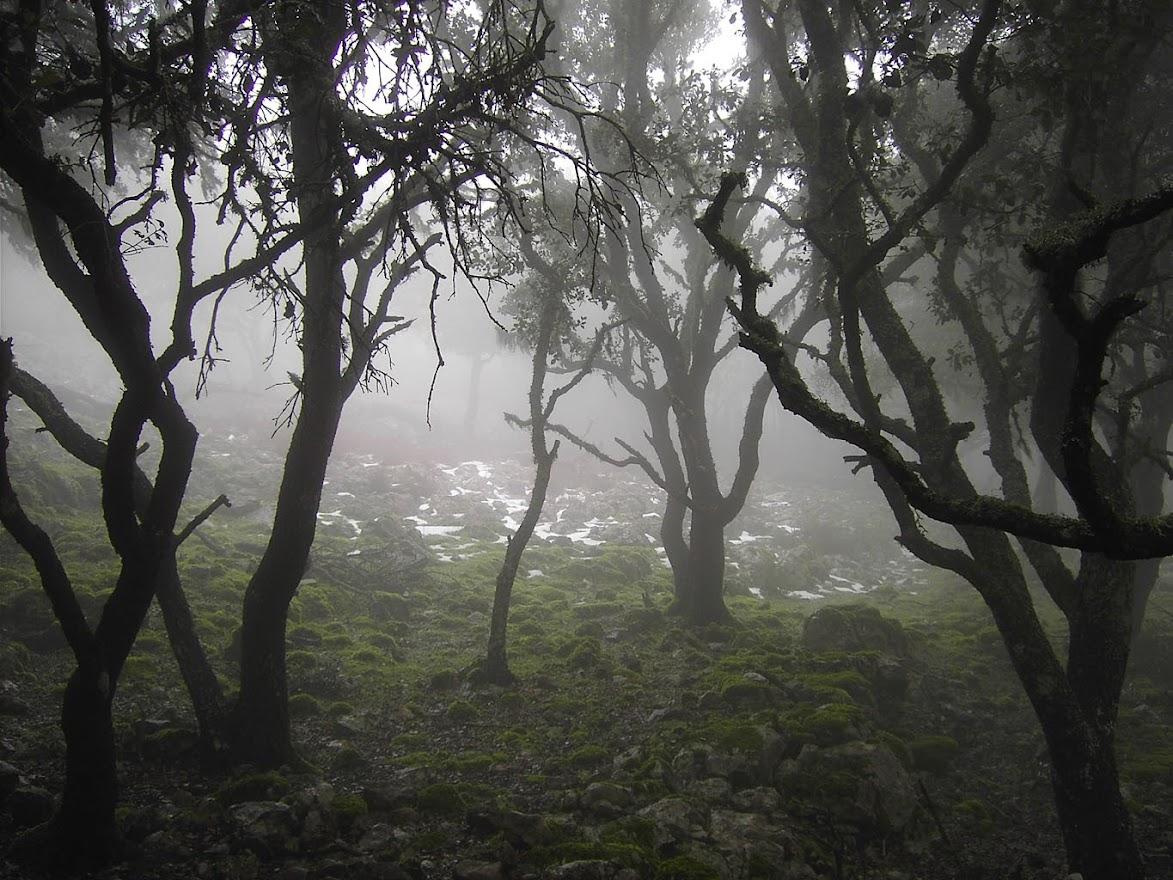 Serra des Puntals (pas de sa Rata)