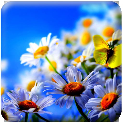 HD Summer Flower Wallpaper