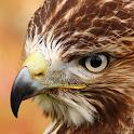 ave de rapiña lwp icon