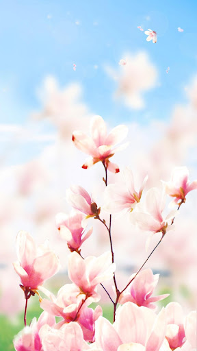 Magnolia Flower Live Wallpaper