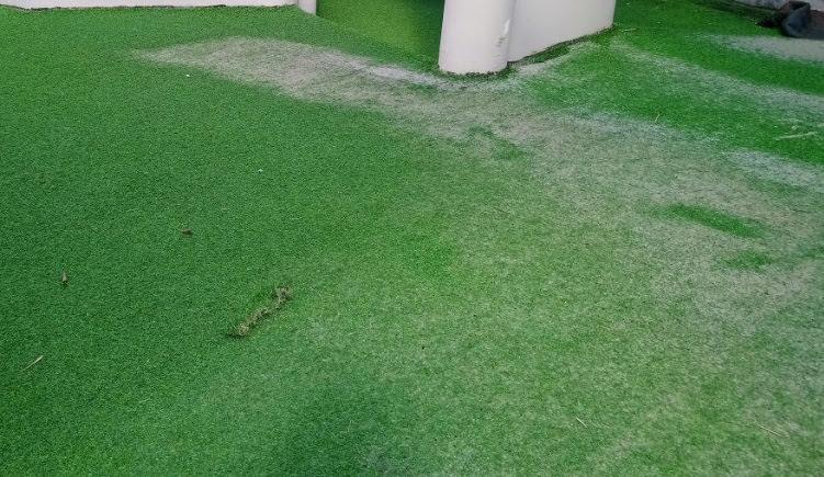 Cần thiết gọt cỏ sân vườn như thế nào là hoàn hảo