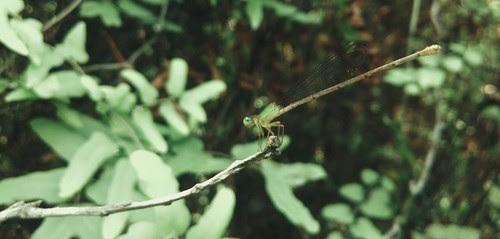 Về làng nổi Tân Lập khám phá rừng tràm 5